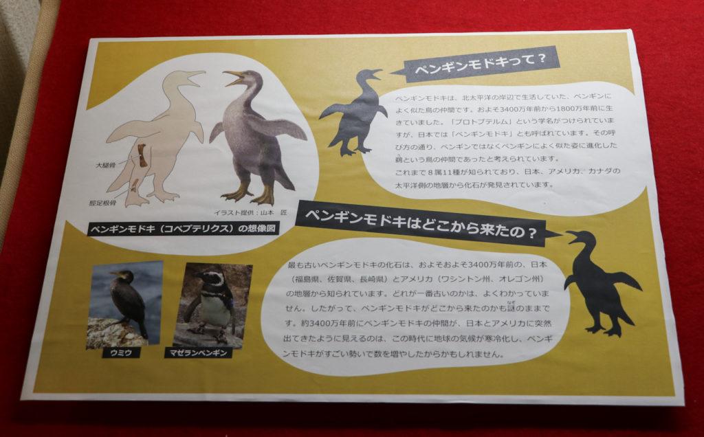 ペンギンモドキの化石解説